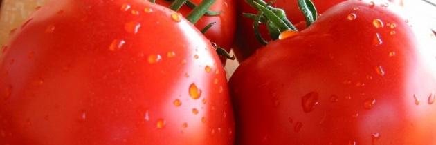 Nawożenie dolistne pomidora