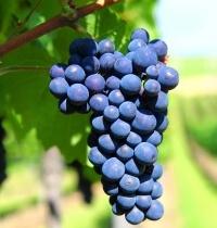 Winiarskie prognozy polskie