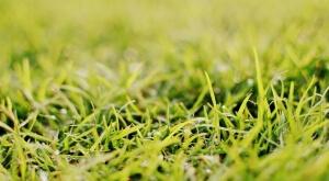 Rolnictwo ekologiczne a środki ochrony roślin