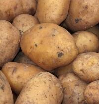 O historii ziemniaka