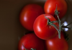 Jak uprawiać pomidora