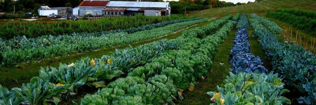 Casus małych gospodarstw rolnych