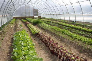 Nowoczesna uprawa roślin