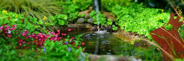 Jak najefektywniej stosować środki ochrony roślin? Poznaj 5 sprawdzonych zasad.