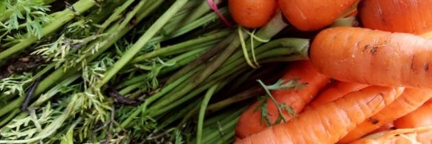 Na czym polega rolnictwo ekologiczne?