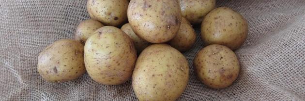 Choroby ziemniaka, jak sobie z nimi radzić cz.2