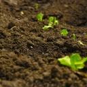 Żyzność gleby – codzienna troska