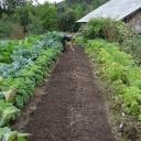 Warzywny ogród eko